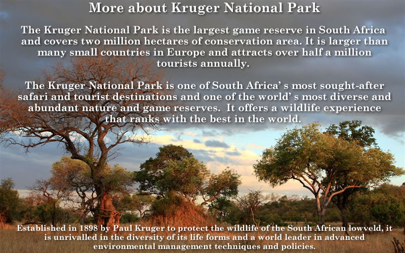 Raptor Research Foundation will hold the 2018 meeting in Kruger National Park